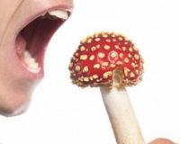 Симптомы отравления грибами